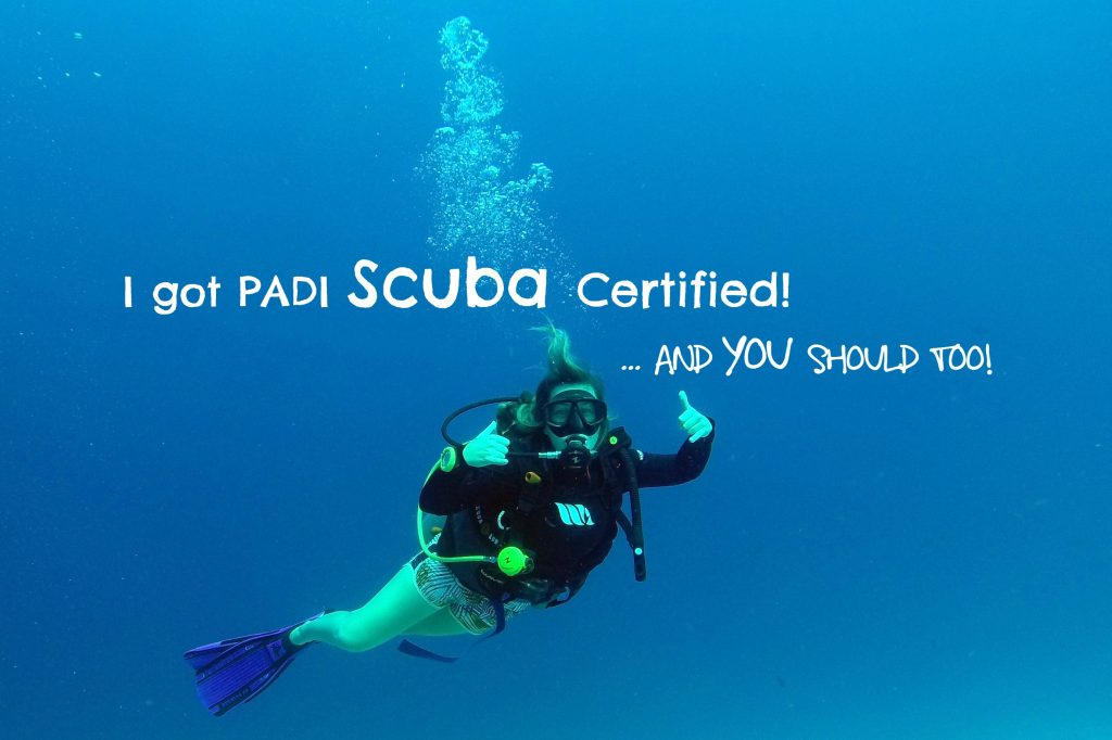 I got padi open water scuba certified and you should too i got padi open water scuba certified and you should too 1betcityfo Gallery