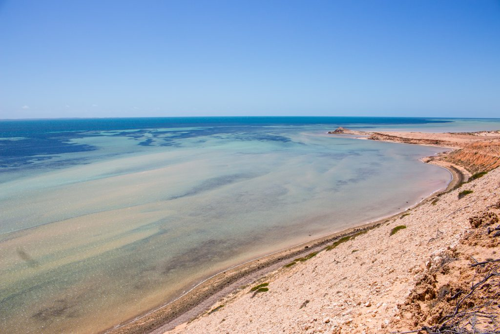 shark bay All you need to know about snorkeling shark bay: how to get there, where to snorkel, what to see ever dreamed about swimming with sharks in the wild.